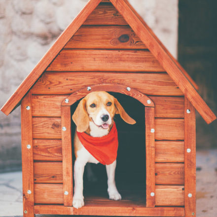 El hogar para nuestro mejor amigo