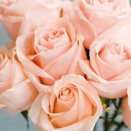 Agua de Rosas, tu nueva Rutina de Belleza