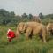 Una Navidad entre Elefantes