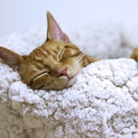 Como tu gato puede aportar beneficios a tu salud